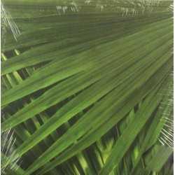 Papier feuille de palmier