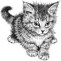 Tampon bois chaton crépu ARTEMIO
