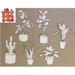 Dies plantes d'intérieur
